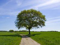 Arti & Makna Se Batang Pohon !