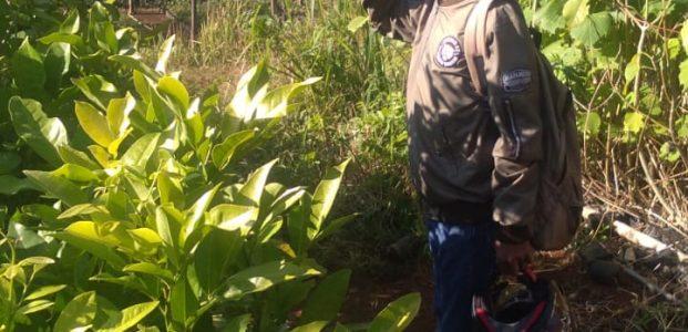 Biaya Menanam & Merawat  Pohon Dalam Satu Hektar