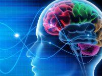 Generasi Milenial Harus Siap Menerima Akibat Penyusutan 4,4% Otaknya !