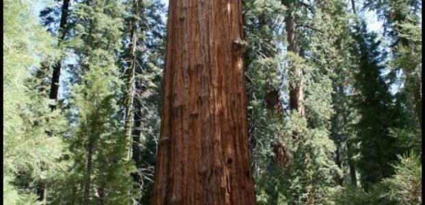 Pohon MengKonsumsi CO2, Karbon !