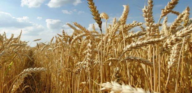 Revolusi Pertanian : Perlukah atau Tidakah ?