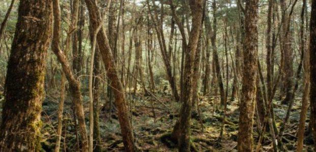 Hutan Aokigahara : Jukai !
