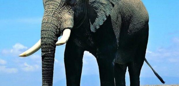 """Pepatah Lama : """" Gajah Tidak Akan Pernah Lupa ! """""""