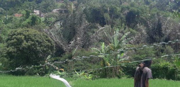 Lahan Seluas 1,6 Hektar Itu Untuk Konservasi !