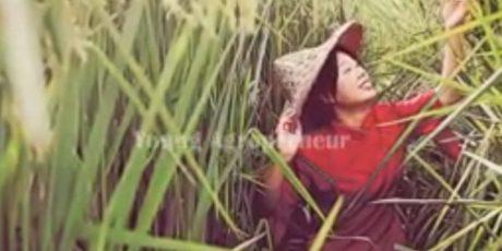 Mimpi ' Yuan Longping China ' Versus Mimpi ' Zaki CJI ' : Bulir Padi Sebesar Kacang Tanah VS Bulir Padi Sebesar Hui/Ubi !